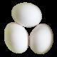 Vapaan kanan kananmunat