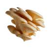 Sienet